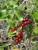 edibleplants